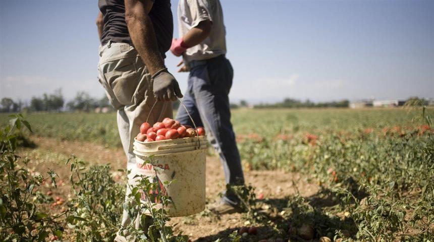 Caporalato, braccianti agricoli immigrati